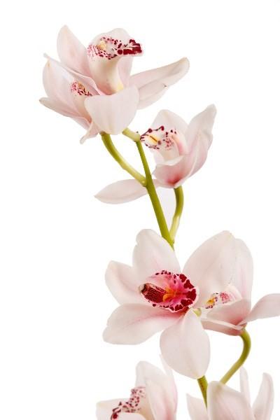 Цветы_149