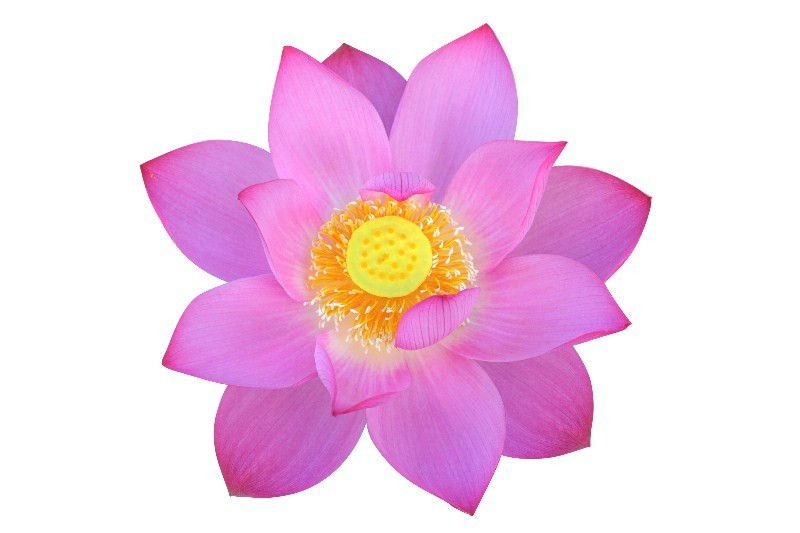 Цветы_173