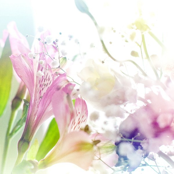 Цветы_158