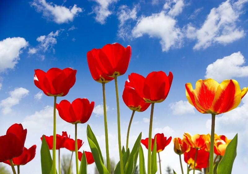 Цветы_104