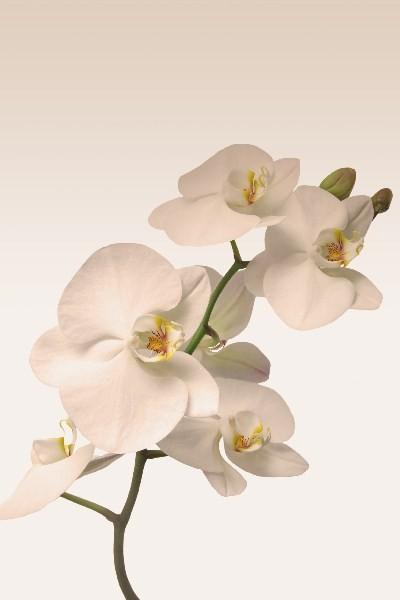 Цветы_001