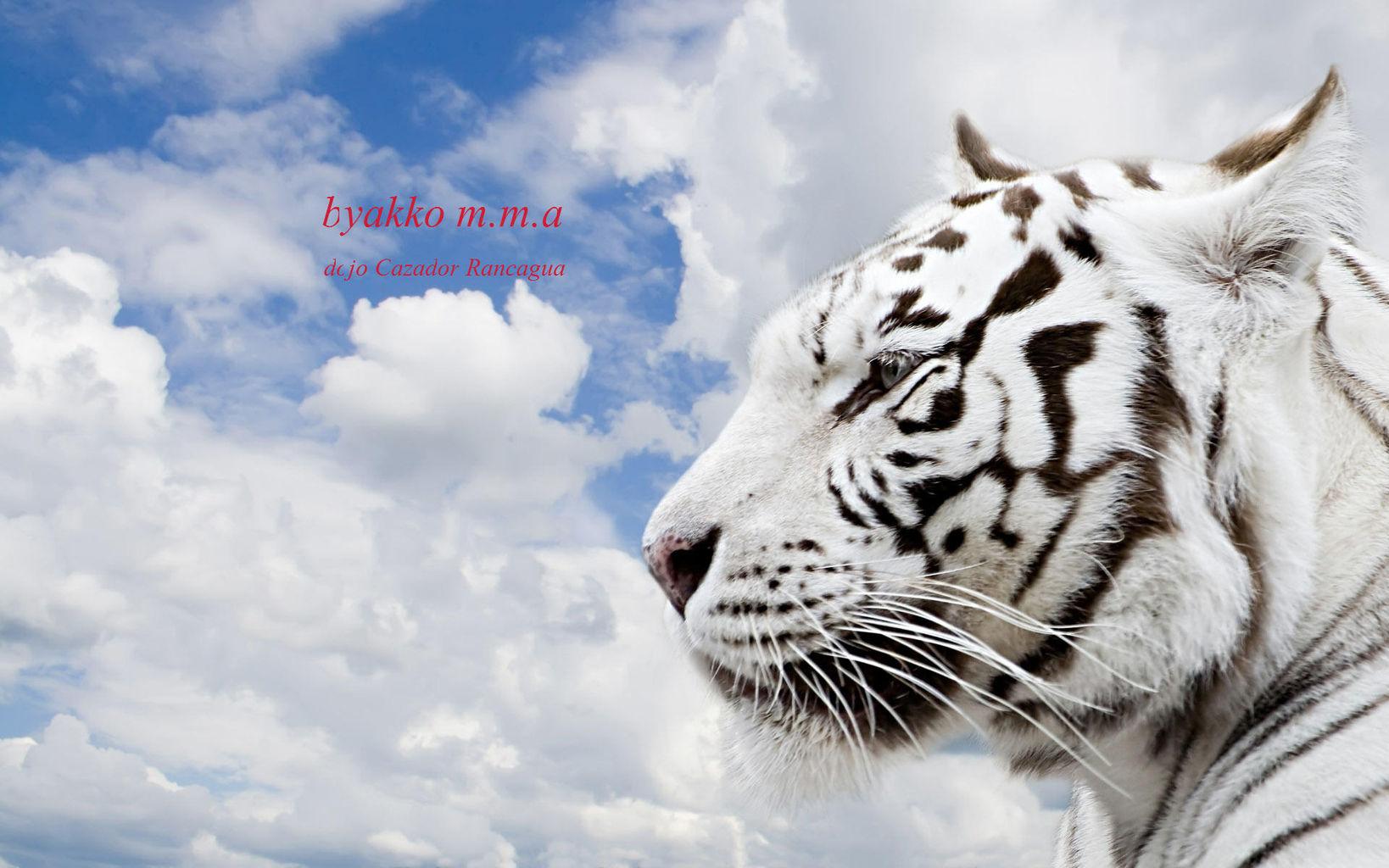 tigre cazador.jpg