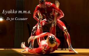 mma sistema muscular (2).jpg