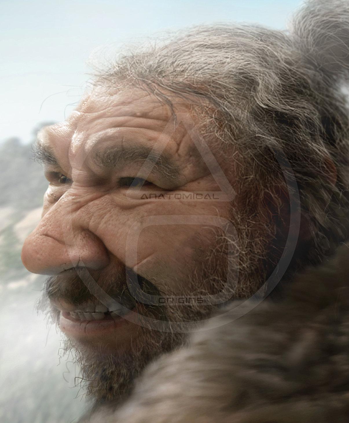 Homo neanderthalensis 300,000-24,000 Neanderthal 1