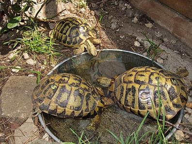 Ver tema filtro biologico peque o estanque for Estanques pequenos para tortugas