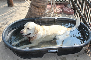 Duke in his pool