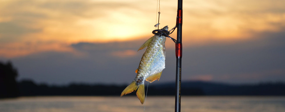 How much does a fisherman/angler spend a year on his bait?