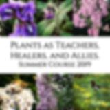 Plant-spirit-promo-square-2019-web.jpg