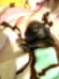4684942B-DE4B-4B05-BB15-9B4DD7EDEF49.jpe