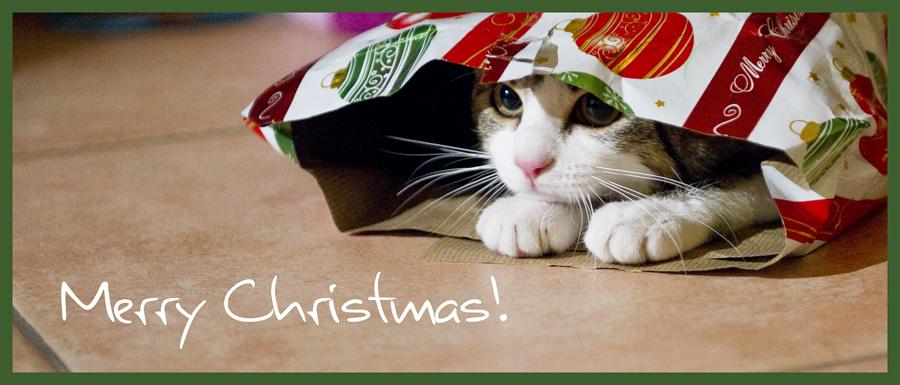 frohe weihnachten mit einer katze feiern yorbay herzlich. Black Bedroom Furniture Sets. Home Design Ideas
