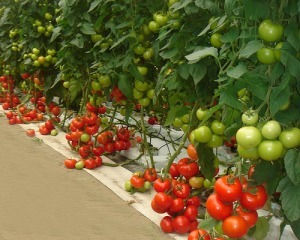 PH Indoor Garden Hydroponics Supplies Pleasant Hill CA 94523