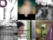 stenopedies2011.jpg