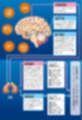 脳のストレス反応縦.jpg