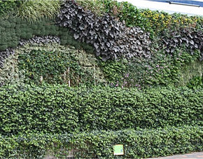 Benefits of green walls for Green wall advantages