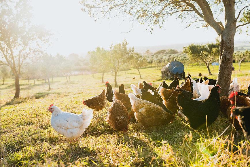 bass-coast-farm-organic-produce-farming-