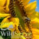 wildserve1.jpg.opt228x228o0,0s228x228.jp