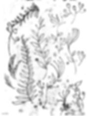 ivonne_plantes_dottodot.jpg