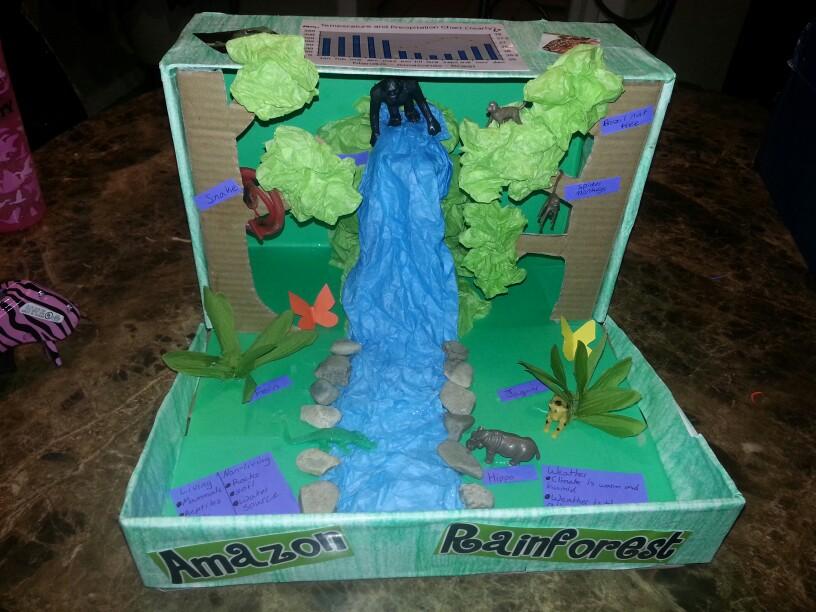 Rainforest Ecosystem Shoebox Project