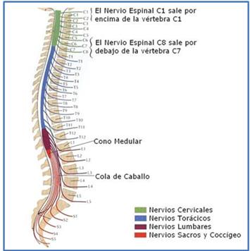 enfermedades-snp | Tipos de Nervios