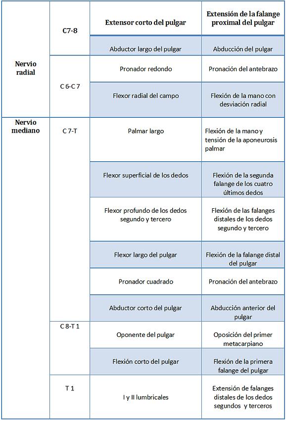 enfermedades-snp | Plexo Braquial
