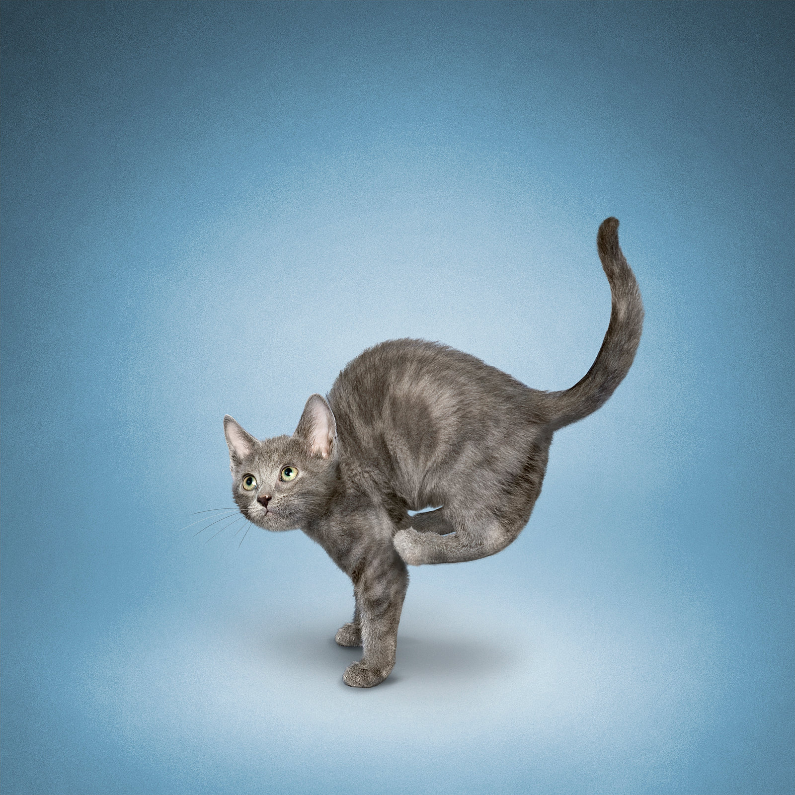 YOGA CATS | WELCOME TO YOGA CATS!