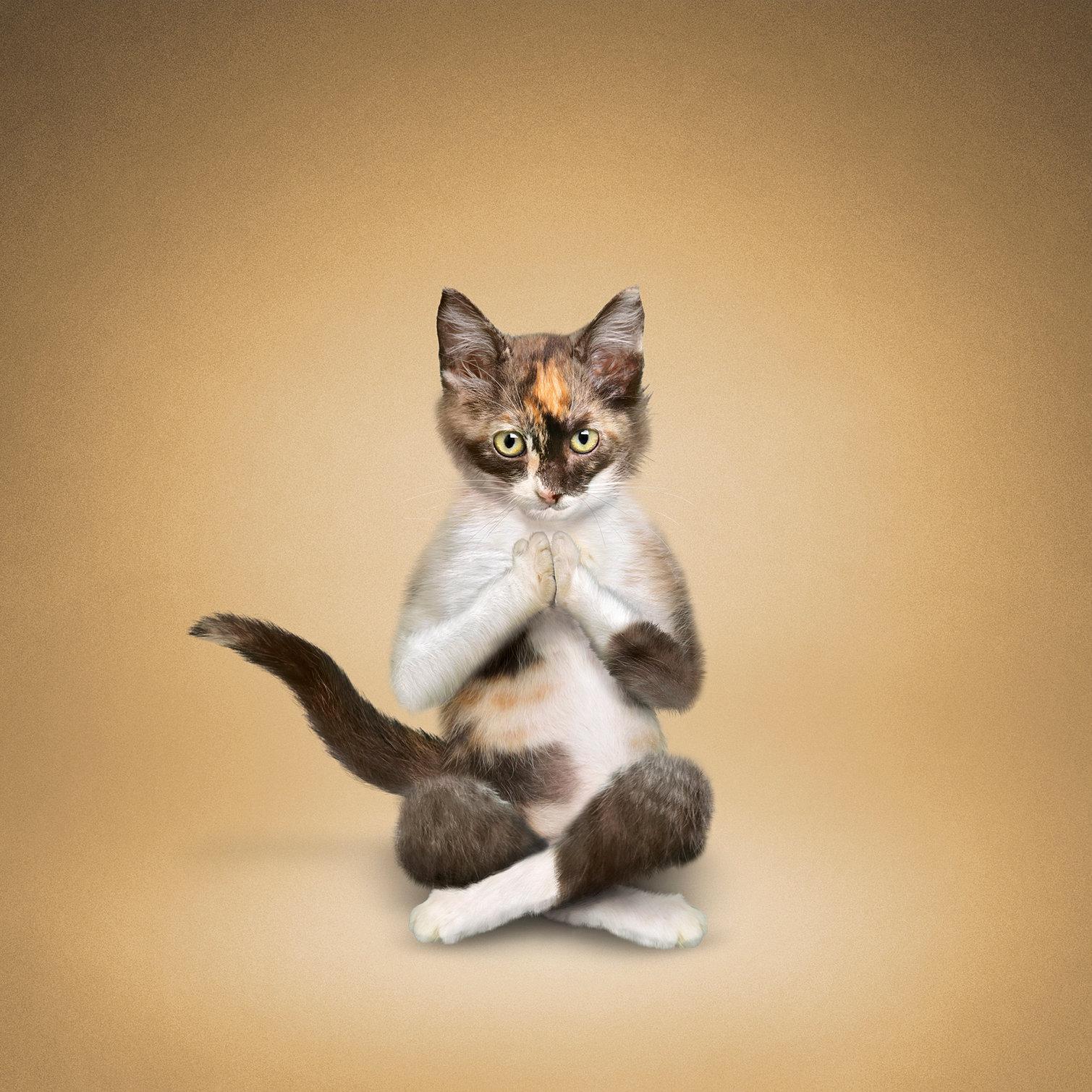Yoga Cat Pictures