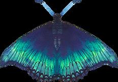 Alkaravan Design Mariposa