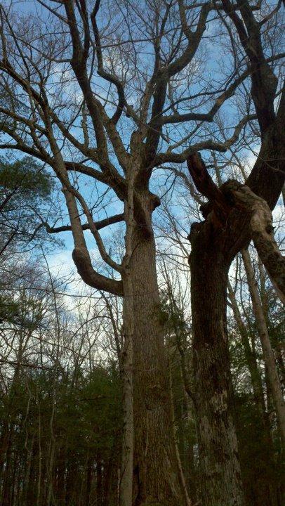 Back to Nature Landscaping & Wildlife Restoration