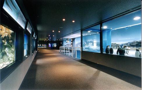 ペンギン水族館14.jpg