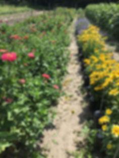 flowers 2019 2.jpg