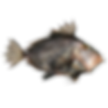 JAW_logo_C_NO_Background.tif