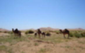 Maroko35.jpg