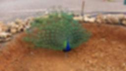 Maroko6.jpg
