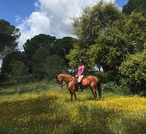 horse-riding in donana el rocio matalascanas