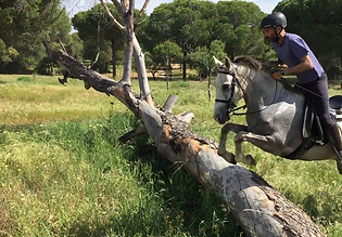 jumping horse trail in donana