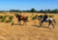 visitar el rocio a caballo, paseo a caballo por el rocio, caballos andaluces