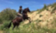 aventuras a caballo en donana, caballo español, mountain trail