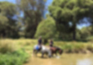 riding horses in Andalusia, spanish horses PRE