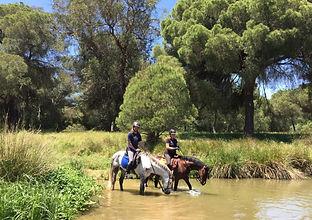 Rutas a caballo andalucia, caballos españoles