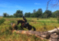 rutas a caballo por el rocio