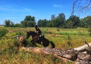 trail riding, ride horses in el rocio, spanish horse PRE