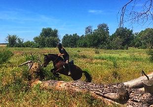 balade a cheval a el rocio, cheval espagnol PRE