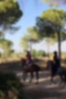 monter a cheval dans le parc national de donana, chevaux espagnols, Huelva
