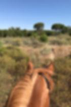 Horseback riding El Rocio, pilgrimage, spanish horses, Huelva
