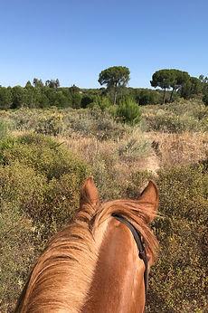 Monter a cheval El Rocio, chevaux andalous Huelva