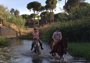 ride a horse in donana, spanish horses PRE
