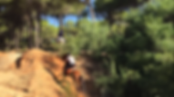 Horseback riding doñana, andalusian horses PRE