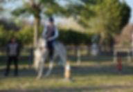 iniciación equitación