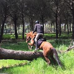Paseo a caballo donana el rocio matalascanas