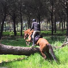 Balade a cheval donana el rocio matalascanas